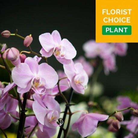 Florist Choice Plant
